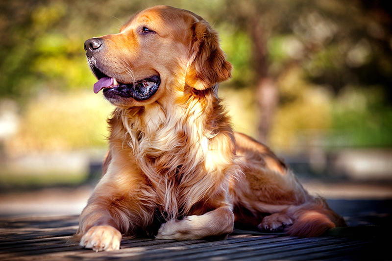 mascotas-perros-9