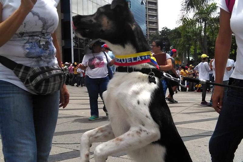Foto: El Nacional.
