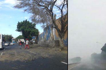 ¡ENTÉRATE! Reportan fuertes ráfagas de viento y árboles caídos en sectores del estado Vargas (+Video)