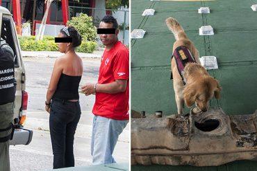 ¡INDIGNO! Padres transportaban droga y usaban a su bebé de un año para burlar las alcabalas (un perrito los descubrió)