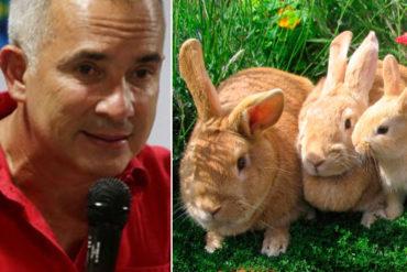 """¡EL COLMO! """"Plan Conejo"""", la nueva idea del Gobierno para combatir la falta de carne y pollo (+No es broma)"""