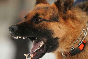 ¡QUÉ HORROR! Madre e hija fueron asesinadas por sus perros (autoridades investigan el extraño caso)