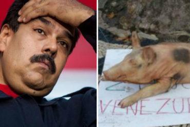 ¡TE VEO MAL, NICO!Páganos el pernil: Con un lechón muerto le dejan recado a Maduro en Portugal (+Foto +Ay Chamo)