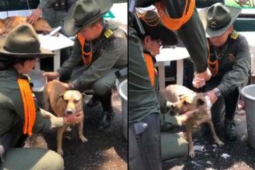 ¡GRAN GESTO! Funcionarios colombianos atienden a perritos que han sido afectados por la represión en la frontera (+Video)