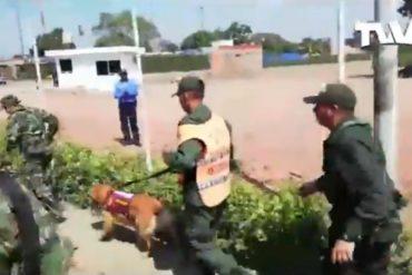 ¡MÍRELOS! Otros 2 GNB le dan la espalda a Maduro y cruzan a Colombia en busca de protección con su perro antidrogas (+Video)