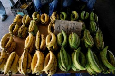 ¡LO QUE FALTABA! Conozca por qué los cultivos de plátano están en riesgo en Venezuela