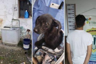¡QUÉ POCO DURÓ EL CASTIGO! Liberaron a los 3 jóvenes que agredieron a un cachorro en Carabobo