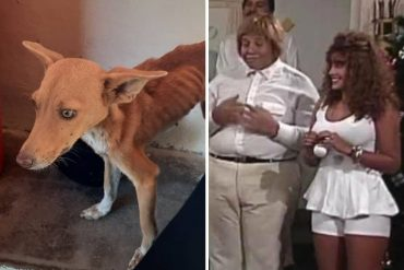 ¡POR DIOS! Allanaron residencia del «Coconazo» de Radio Rochela por tener animales desnutridos para supuestos rituales de santería en Margarita (+Fotos impactantes)